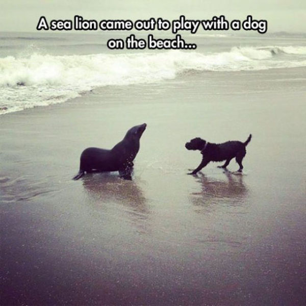 Hilarious Animal Pictures to Raise Your Mood