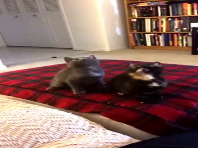 Kittens' Perfect Synchronized Dancing to 'Turn Down For What'