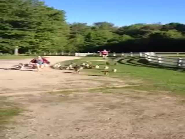 The Cutest Goat Stampede Ever