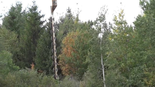 How to Trim Trees Near Power Lines