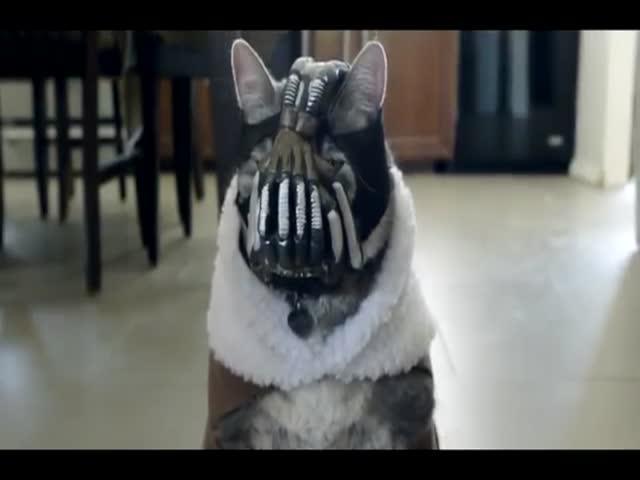 Beware Bane Cat #2