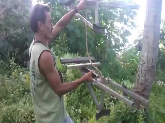 An Innovative Way of Climbing Up a Coconut Tree  (VIDEO)