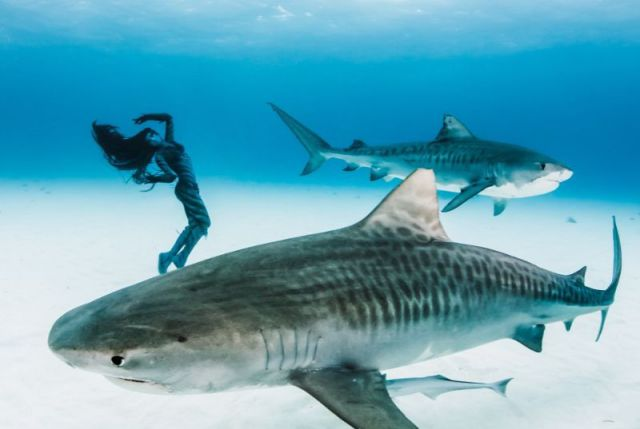Stunning Photos of a Beautiful Model Swimming with Sharks