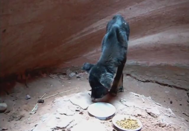 Man Rescues Puppy Stuck in 350-Foot Deep Canyon