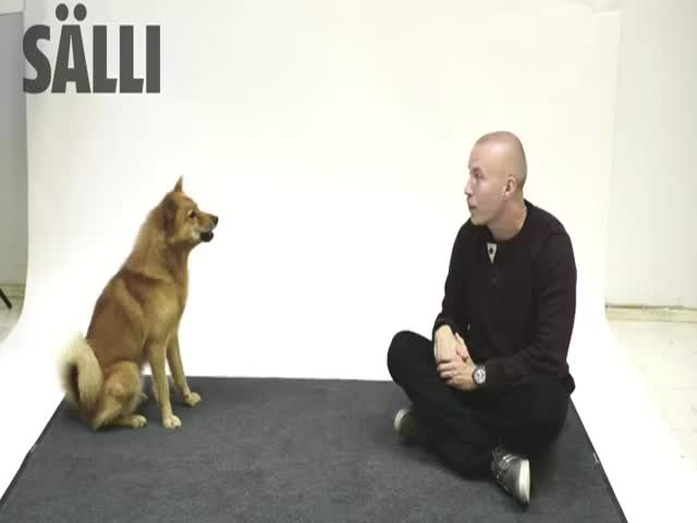 How Dogs React to Human Barking  (VIDEO)