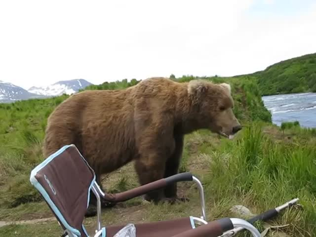 Alaskan Camper Has Incredible Up-Close Encounter with Brown Bear