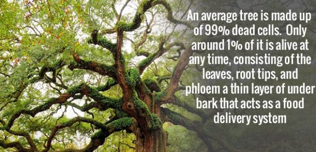 Intriguing Facts That Will Amuse You