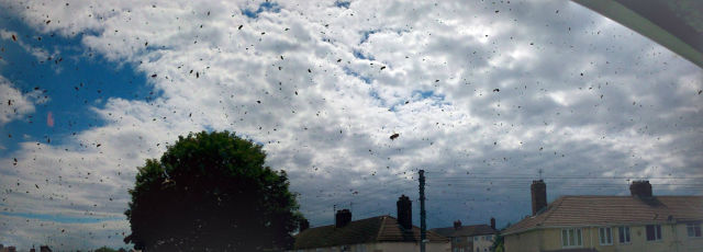 House Occupants Held Hostage By a Swarm of Bees