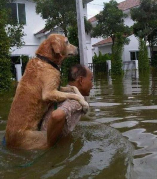 The Human and Animal Relationship Is Very Special
