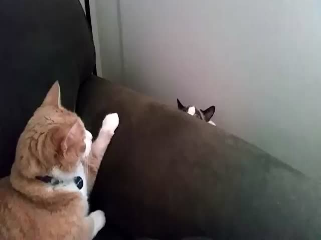 Two Cats Meet for the First Time  (VIDEO)