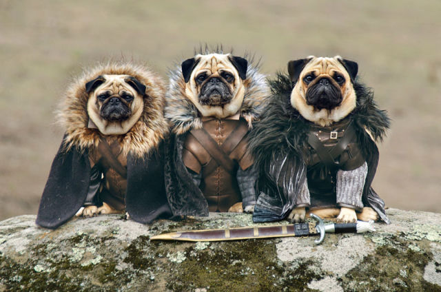The Pugs of Westeros: A SFW Version of