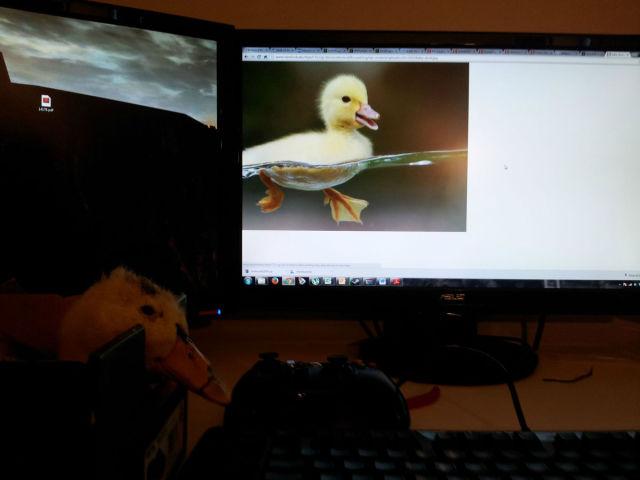 A Very Lucky Ducky
