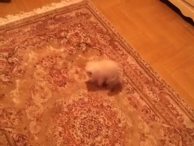 Moving Carpet Gives Sweet Kitten a Fright  (VIDEO)