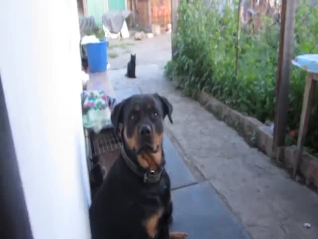 How to Scare a Rottweiler
