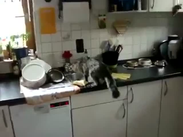 Cat Helps to Do the Dishes