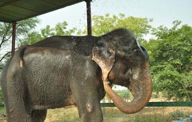 Elephant's Touching Response to Being Set Free