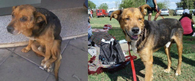 Incredible Before and After Photos of Rescued Dogs