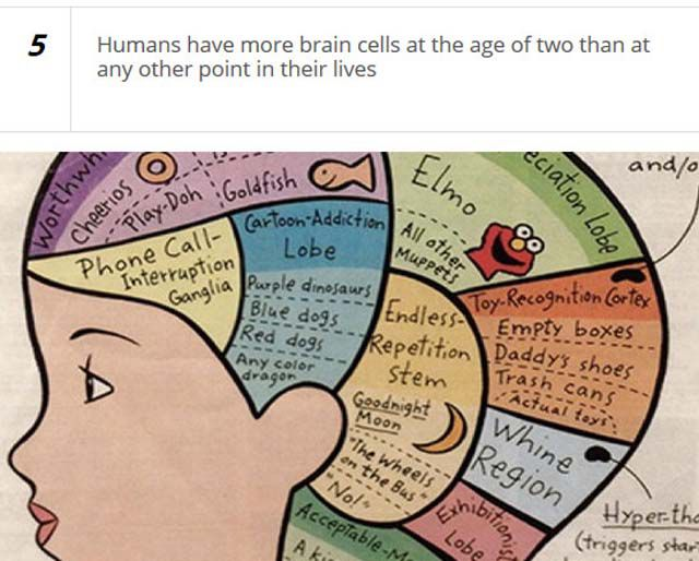 Fascinating Stuff You Probably Don't Know about Your Brain