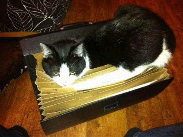 Cats Find the Oddest Places to Get Comfortable