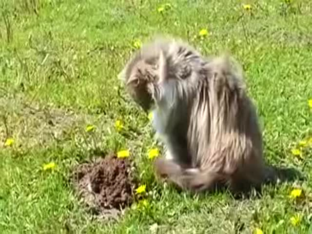 This Cat Who Completely Owns This Mole