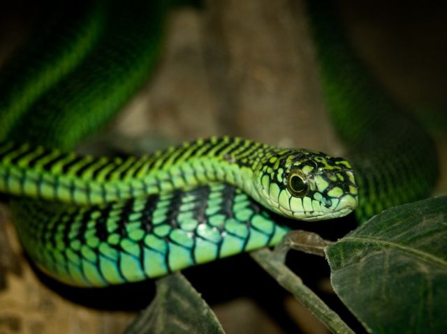 The Deadliest Snakes on the Planet (32 pics) - Izismile.com