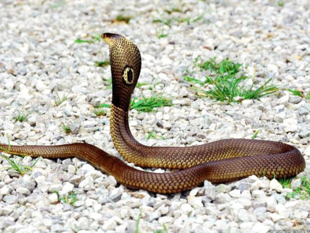 The Deadliest Snakes on the Planet