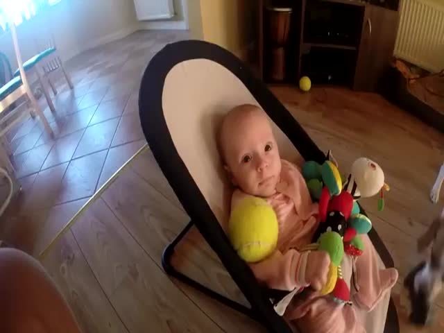 Guilty Dog's Way of Apologizing for Stealing Baby's Toys