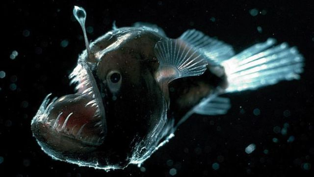 Real Ocean Creatures That Could Be from Your Worst Nightmares