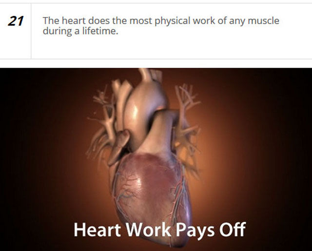 Cool Facts about the Human Heart