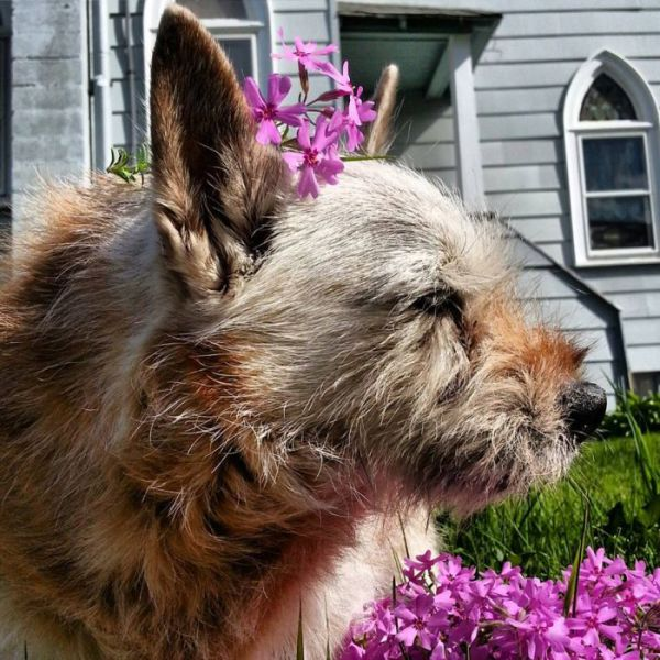 A Dying Dog's Last Adventurous Months Alive