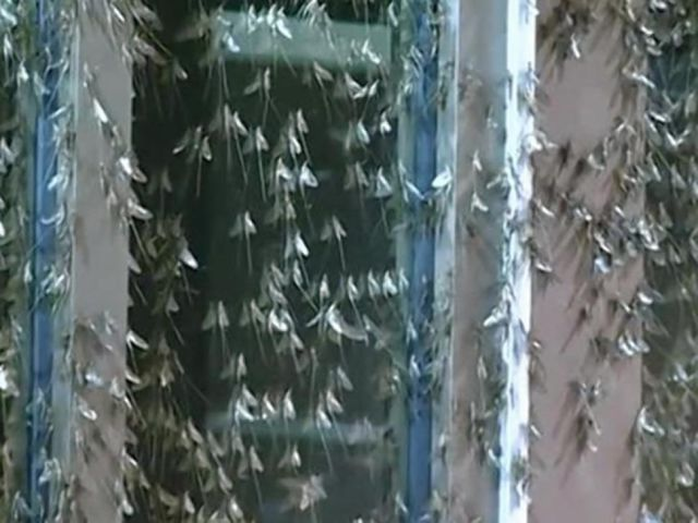 Mayflies Infest Parts of the US