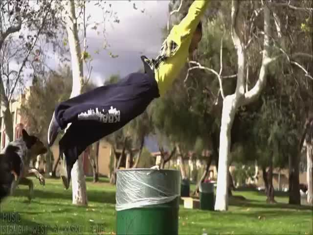 Epic Parkour Dog  (VIDEO)