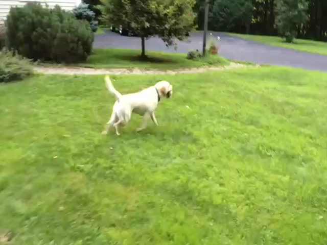 Dog's Uncanny Way of Stopping after Running  (VIDEO)