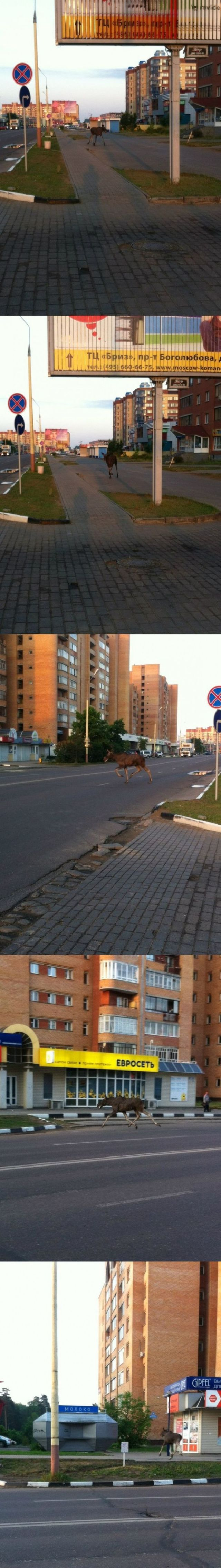 A Little of What You Can Expect to See When You Visit Russia