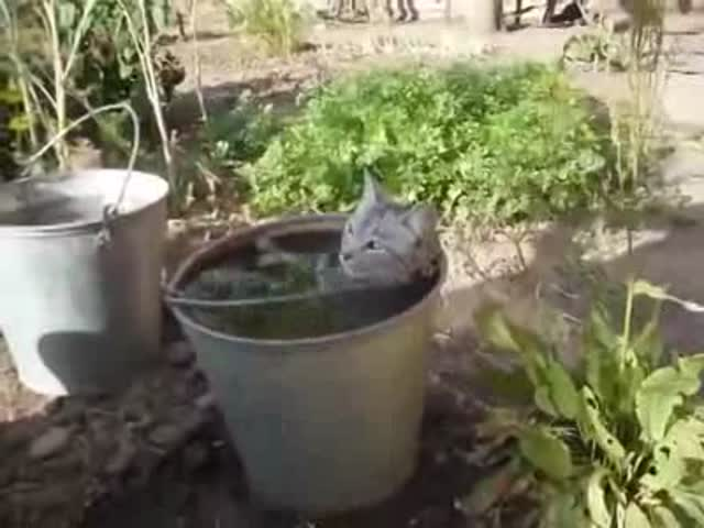 And They Say Cats Are Afraid of Water!  (VIDEO)