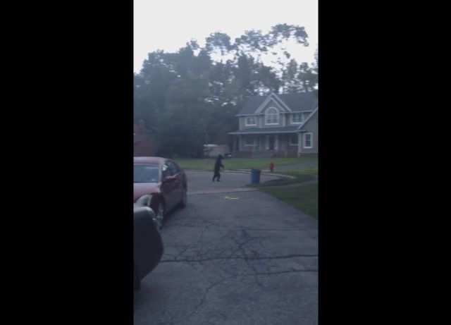 Black Bear Walks like a Human in a Neighborhood