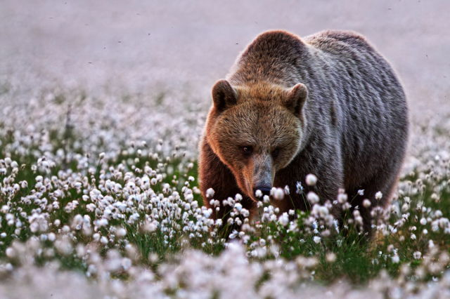 Wildlife Photos That Are Truly Stunning