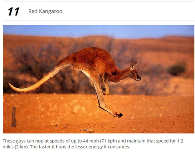 Wild Land Animals That Are Very Fast