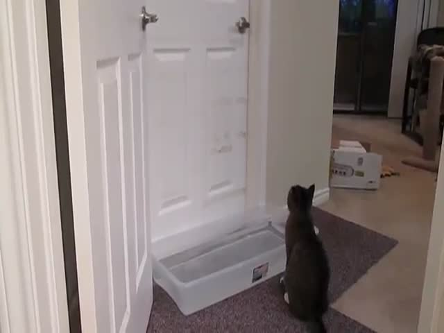 Cat Learns to Open Doors and Even Traps Won't Stop Him  (VIDEO)