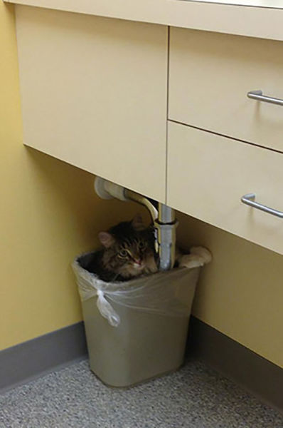 Pets Really Don't Enjoy Visits to the Vet