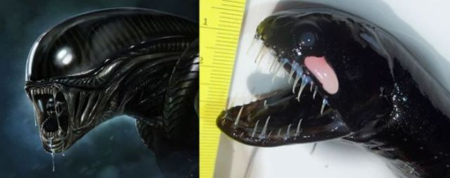 An Ocean Creature That's Totally Alien