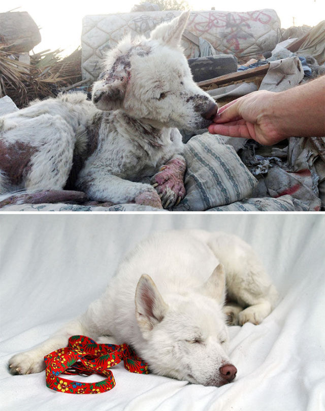 Incredible Transformation Pics of Rescued Dogs