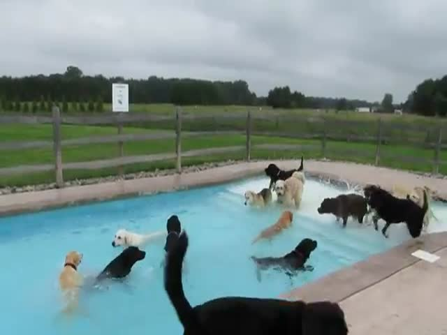 Doggy Pool Party  (VIDEO)