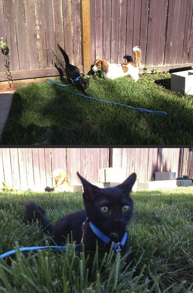 Classic Cat Reactions to Their First Experience of the Outdoors