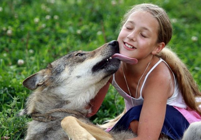 The Family Who Are Really Living with Wolves