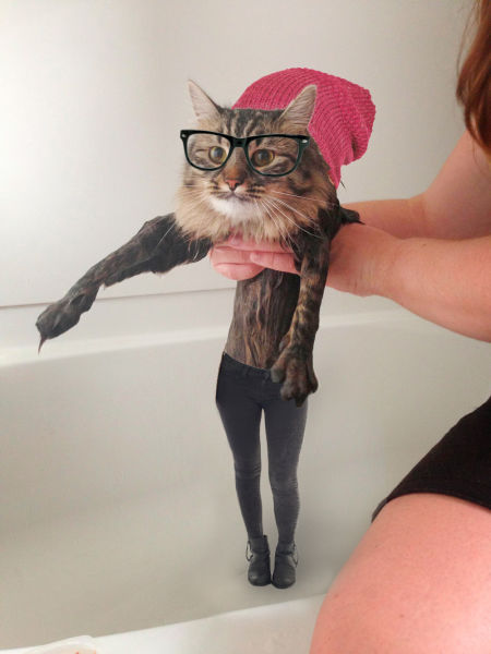 The Oddest Looking Wet Cat Ever