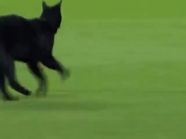 Black Cat Disrupts Football Match