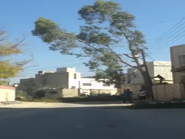 How Not to Cut Down a Tree  (VIDEO)