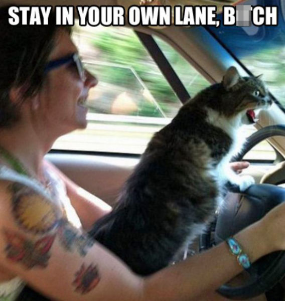Hilarious Captioned Pics to Make You Smile