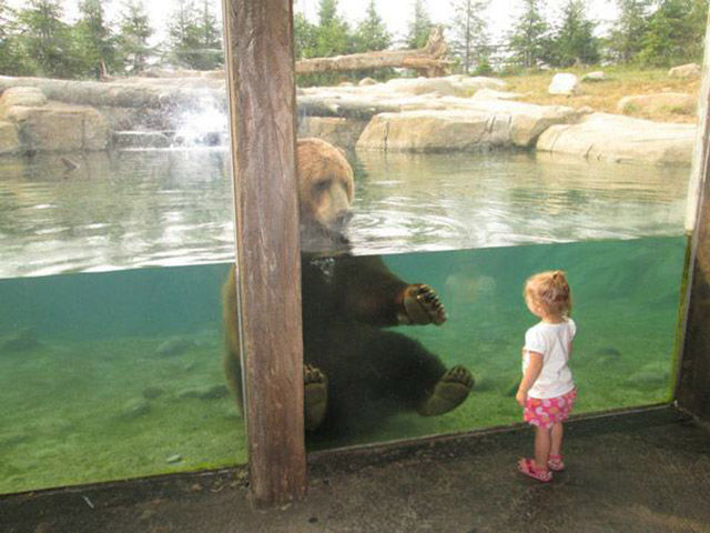 A Collection of Sweet, Silly and Funny Moments at the Zoo